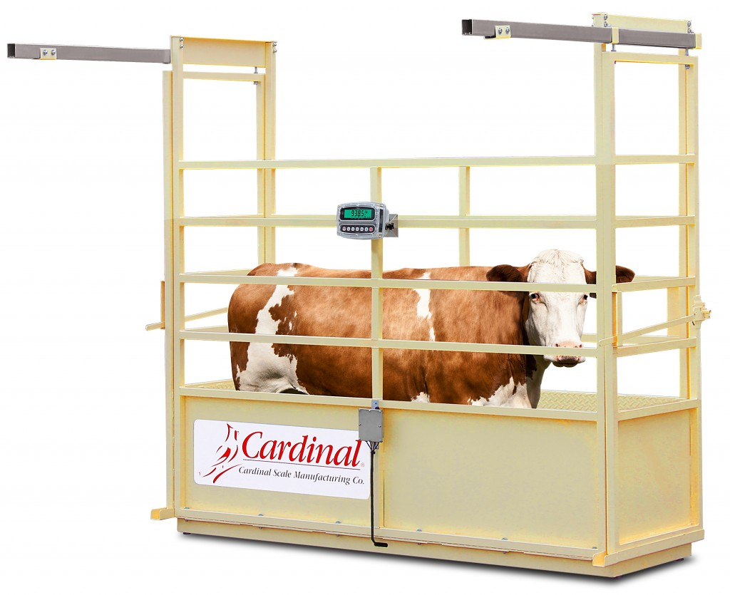 Cardinal Scale's New Single Animal Livestock Scales Accurate to ½ LB
