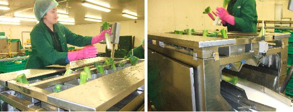 UK leek packers choose Aja fixed weight retail pack weighing solutions