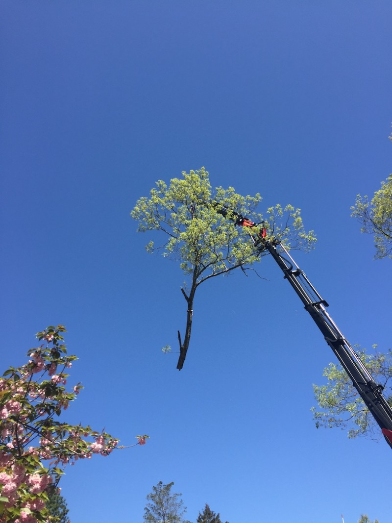 Straightpoint Load Cell in Tree Felling Application