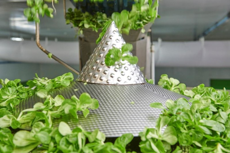Ishida Provides Ideal Solution for Salad Weighing