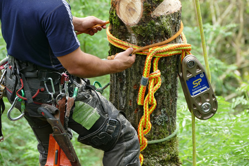 Impact Block: The New Technology from Straightpoint to Enhance Safety in Tree Felling Applications