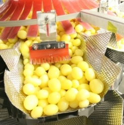 Ishida's Multihead Weigher provides gentle solution for potatoes